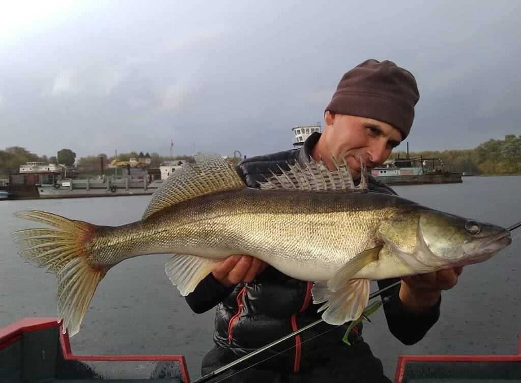 Рыбалка на оке в серпуховском районе: какая рыба водится, отзывы