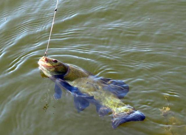Ловля линя на поплавочную удочку, поплавочная оснастка на линя