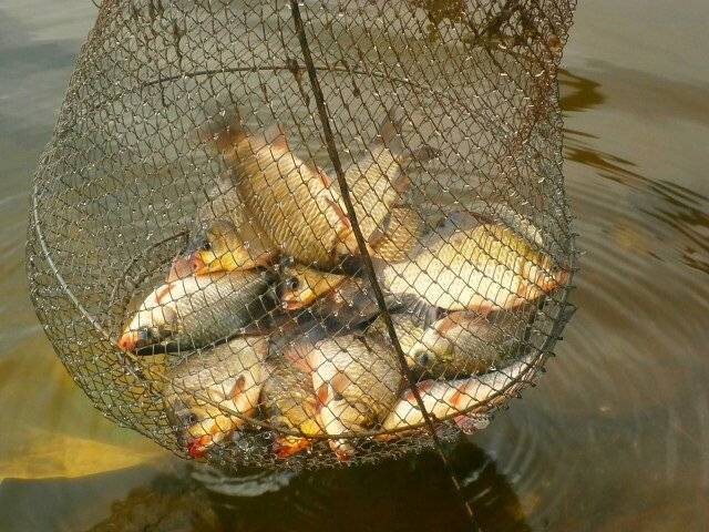 Почему рыба не клюет: причины, факторы, способы активации