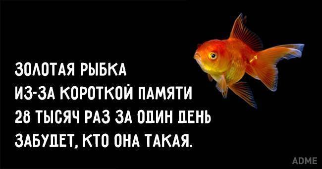 Правда что у рыб память 3 секунды