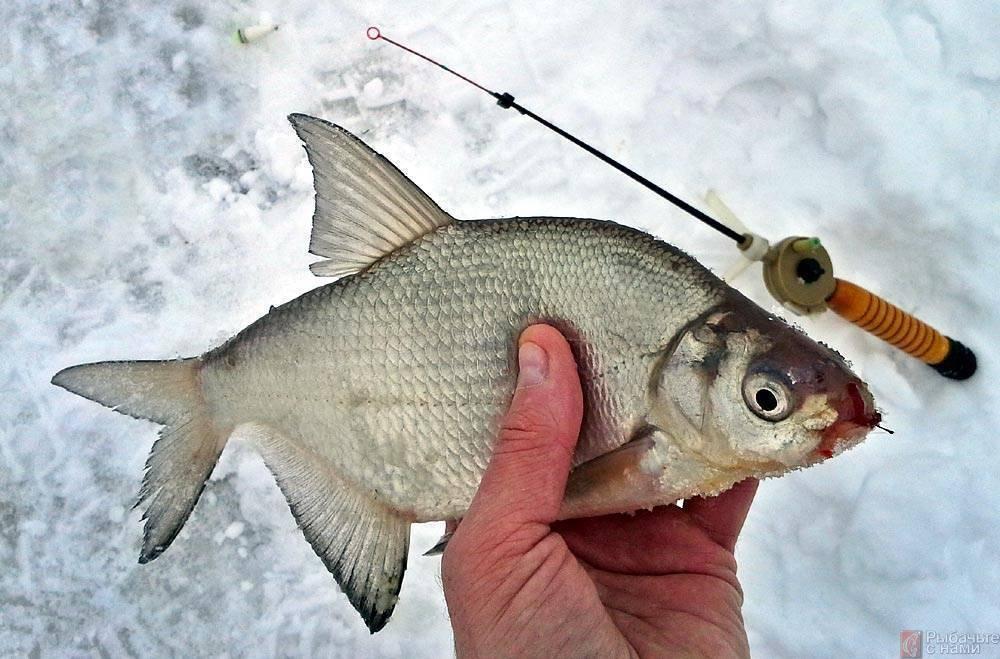 Зимняя рыбалка на леща: снасти для ловли со льда, техника ужения