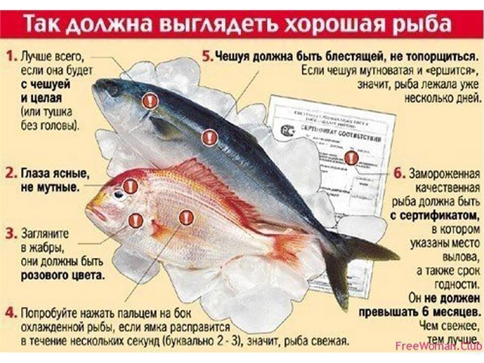 Как научиться ловить рыбу. советы начинающим рыбакам
