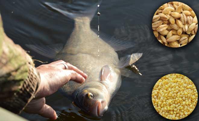 Лещ на пенопласт: две распространенные ошибки при ловле – рыбалке.нет