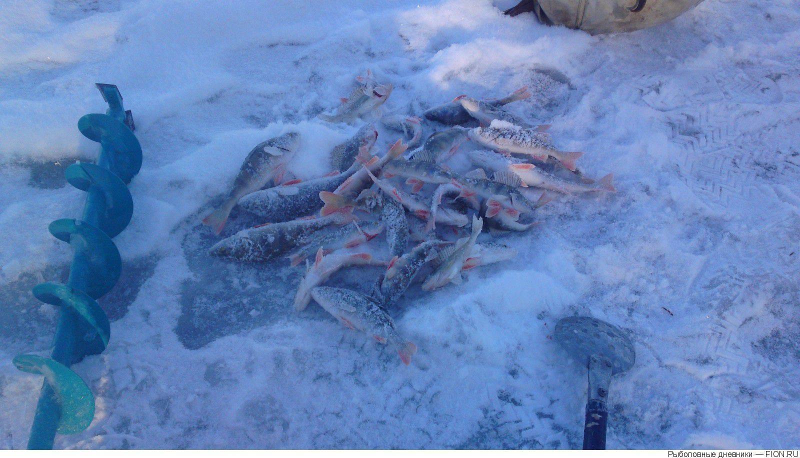 Рыбалка в ишиме и ишимском районе: лучшие места для ловли, какая рыба водится в реке