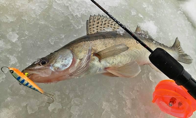Ловля окуня на балансир зимой. особенности и секреты. - на рыбалке!