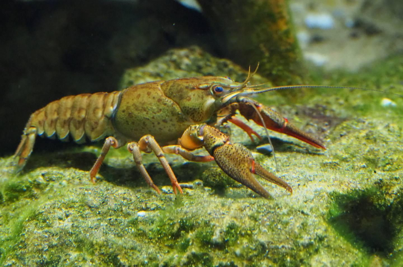Аквариумные рыбки: 1100 видов с названиями, фото и описанием