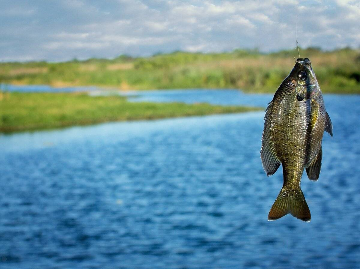 Рыбалка на плещеевом озере: особенности и цены на рыбалку