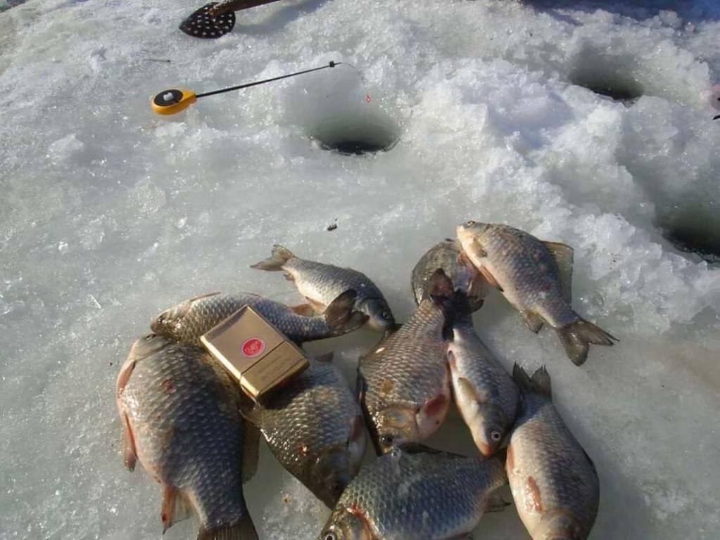 Ловля карася зимой со льда. секреты ловли карася зимой. зимняя ловля карася