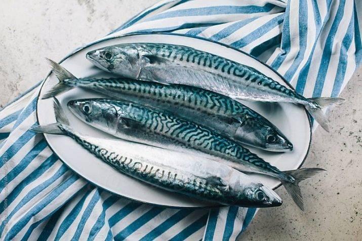 Чем отличаются рыба макрель и скумбрия: где обитают и чем отличаются?