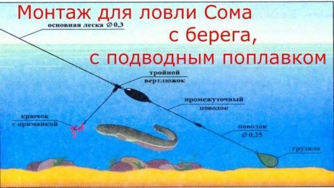 Ловля сома на квок: секреты рыбалки на сома с лодки