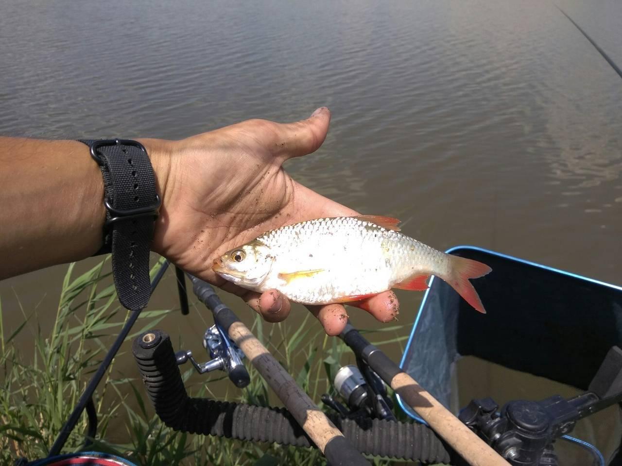 Бесплатно / поиск по тегам / рыболовная база - данные о прудах и водоемах краснодарского края