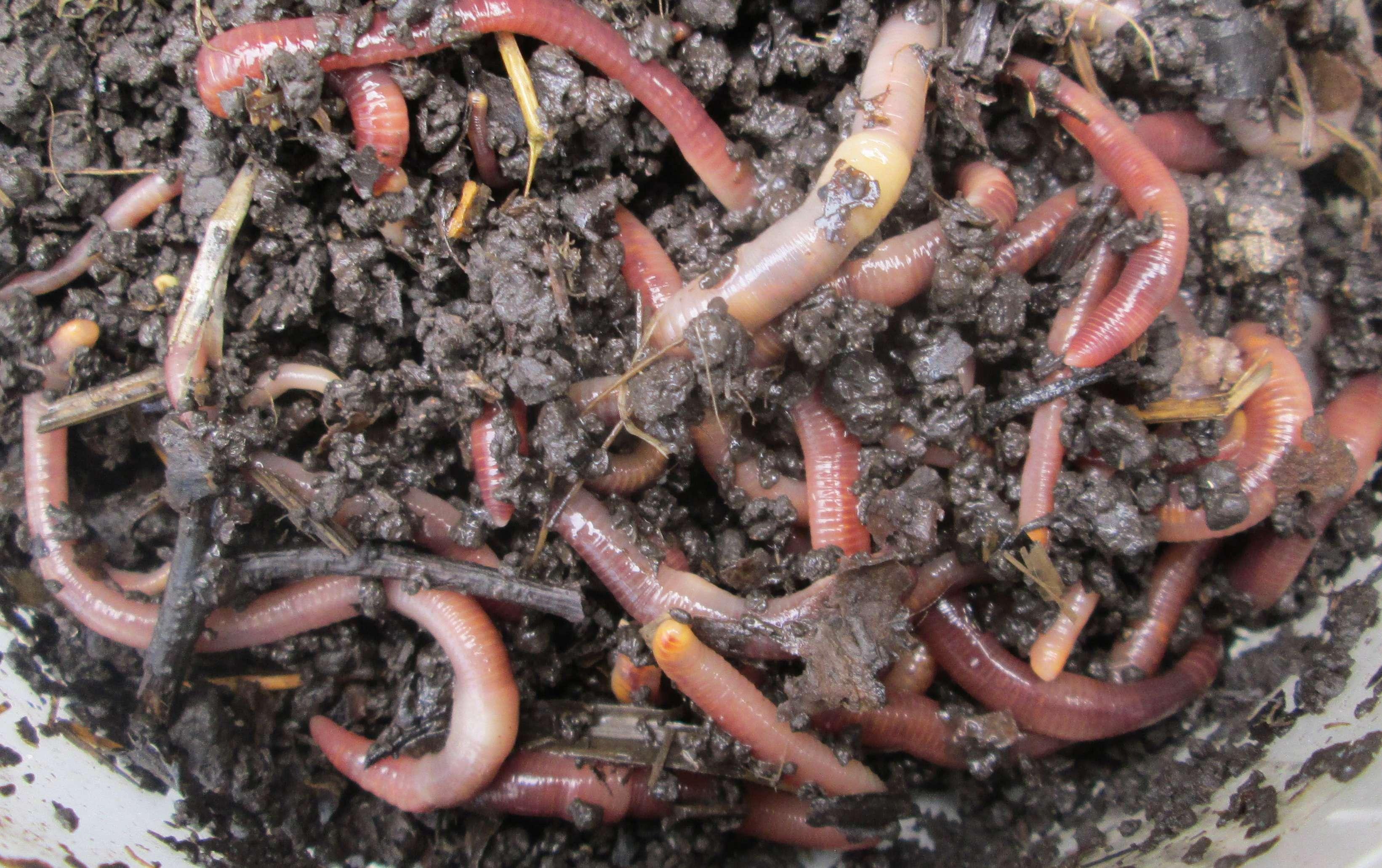 Что делать, если закончился червь? альтернативные виды насадки – рыбалке.нет