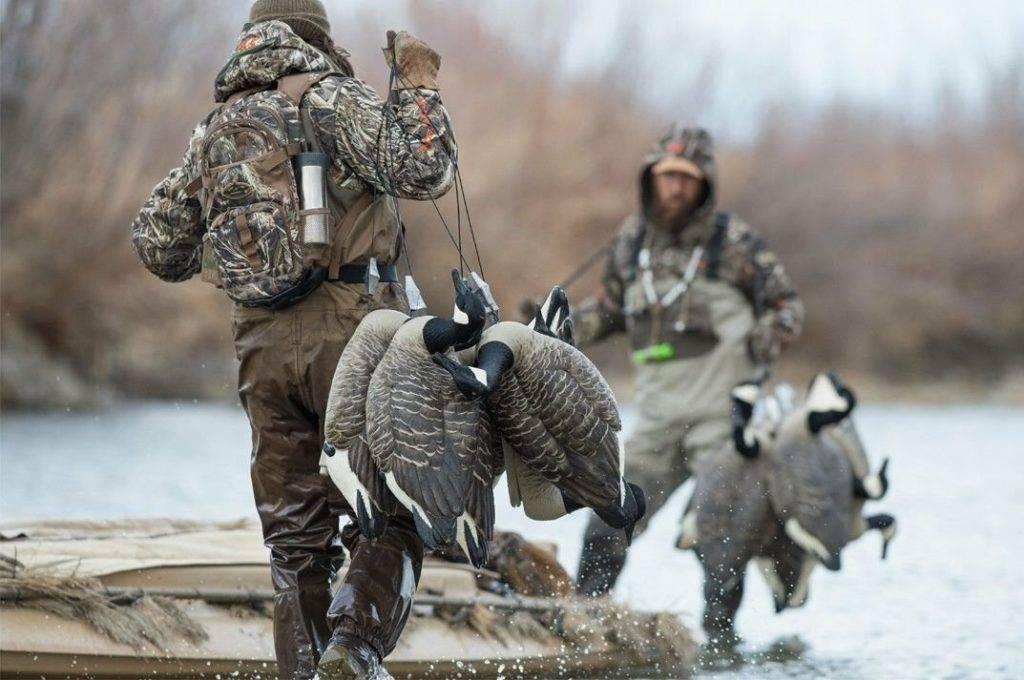 Охота на ондатру: особенности, необходимое снаряжение, советы опытных охотников