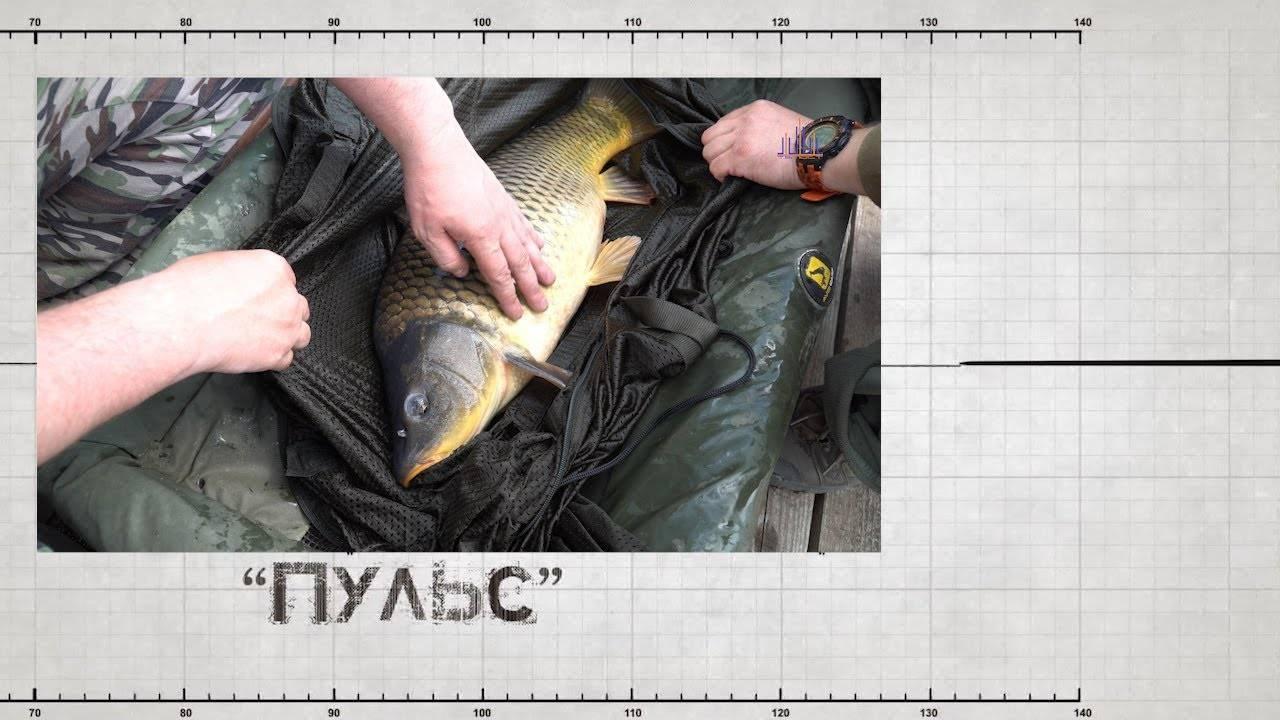 Рыбалка платная в егорьевске – егорьевск платная рыбалка – д. березняки (12 км от города)