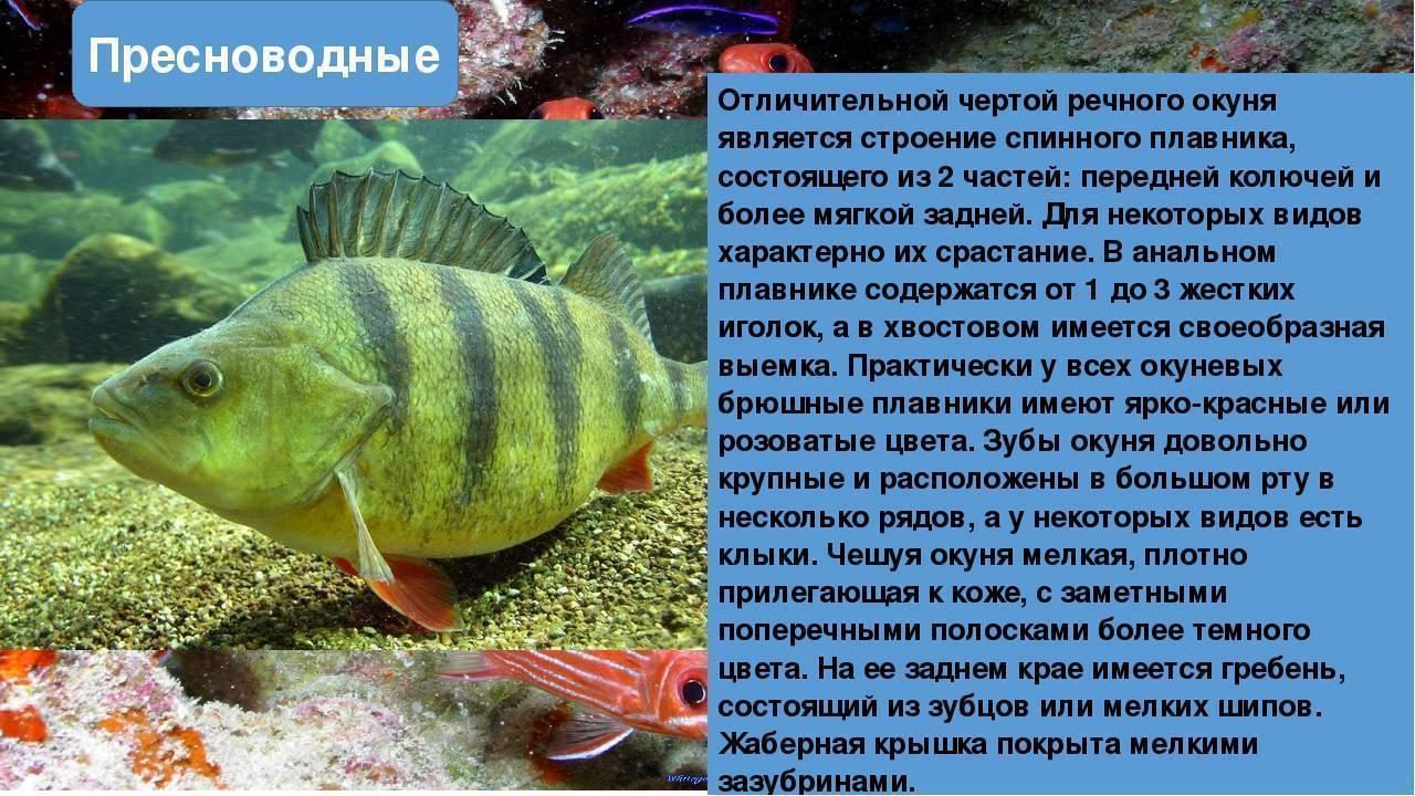 Болезни аквариумных рыбок: фото, признаки и их лечение дома