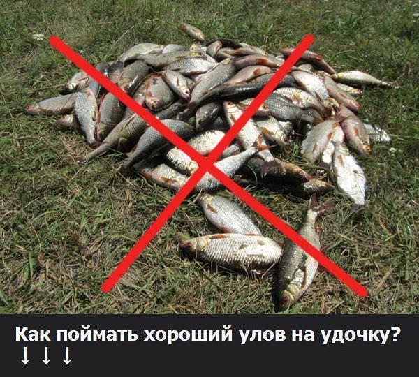 Штрафы и наказания за незаконную рыбалку в 2020 году