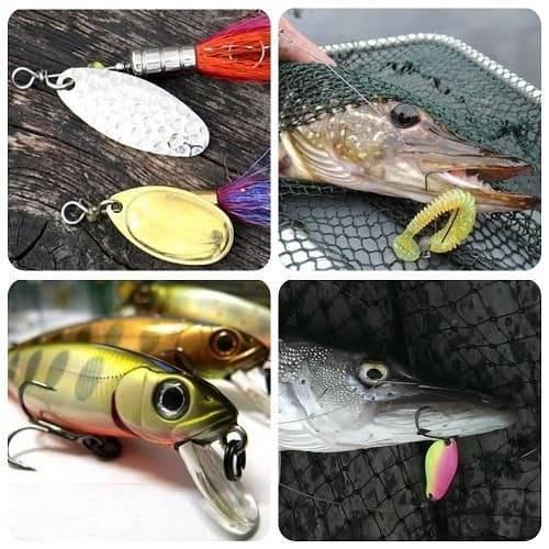 Тактика рыбалки на щуку с берега и лодки в разные времена года