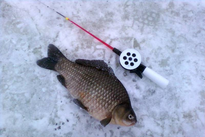 12 лучших мормышек на карася зимой и техника ловли рыбы со льда 12 лучших мормышек на карася зимой и техника ловли рыбы со льда