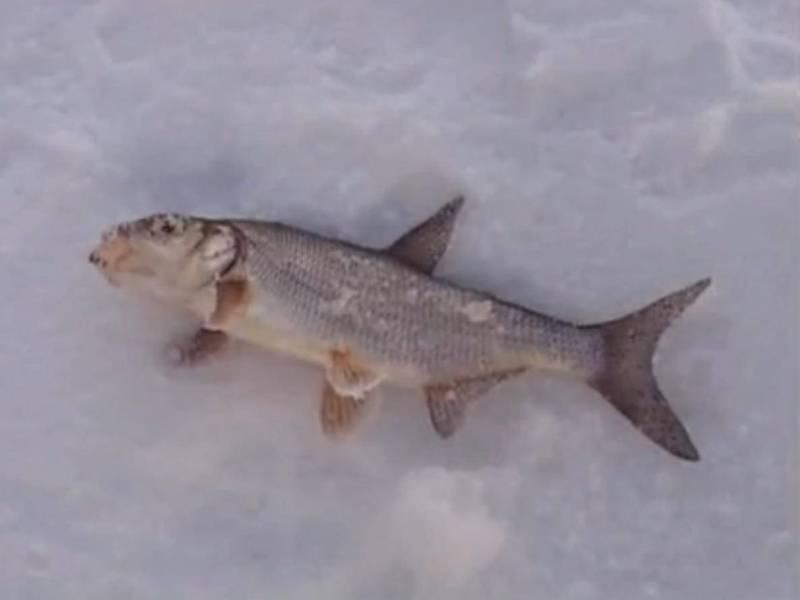 Оснастка зимней удочки: правильное оснащение снастей для рыбалки в стоячей воде и по течению