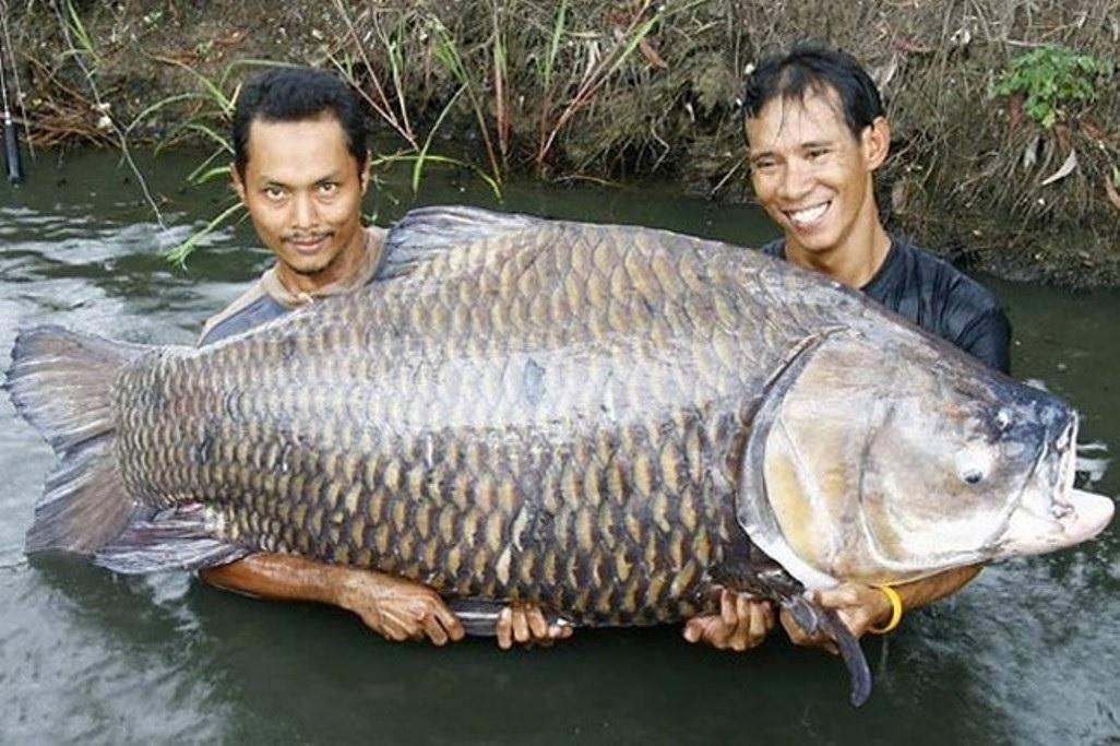 Рыба: проблемная и прибыльная