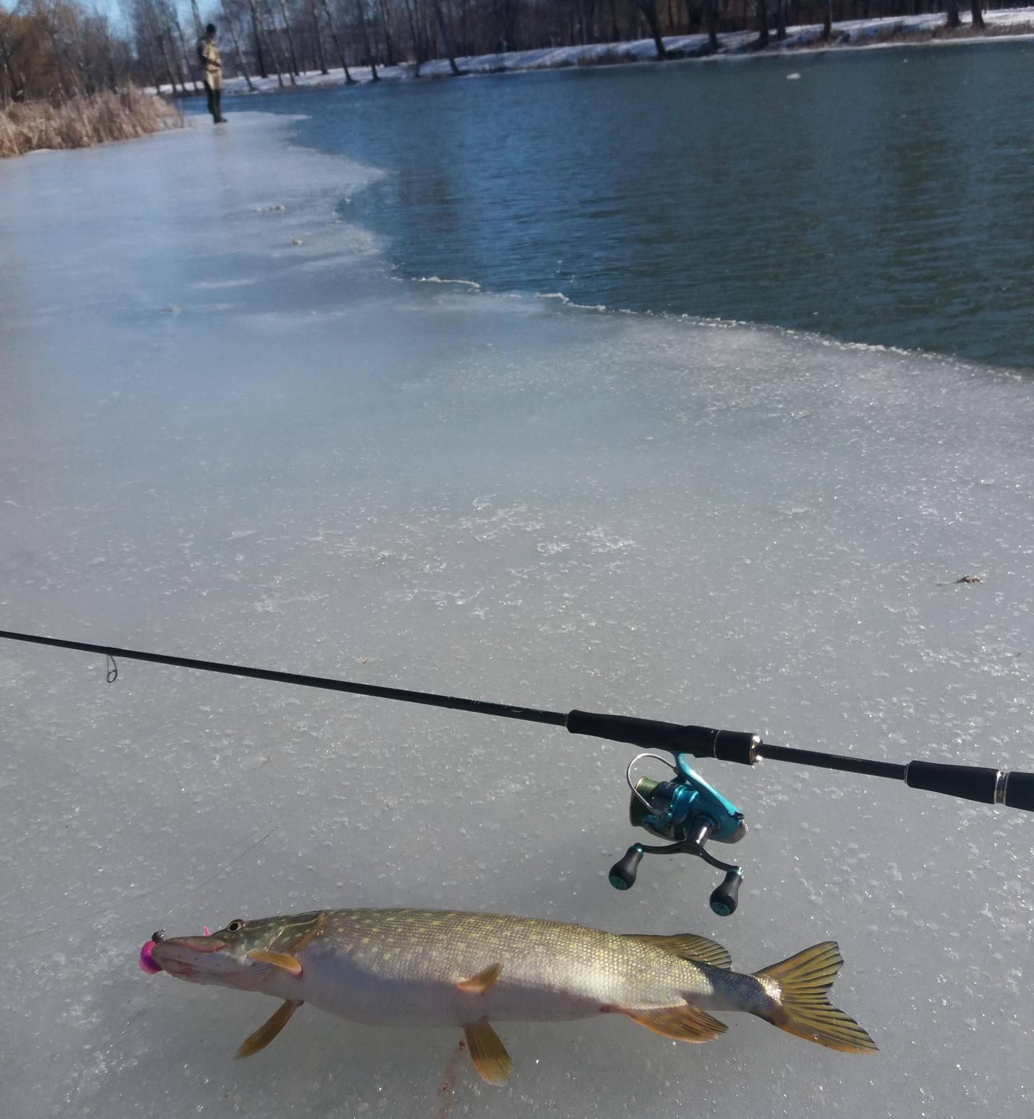 Рыбалка на канале имени москвы: места ловли, какая рыба клюет и когда ловить?