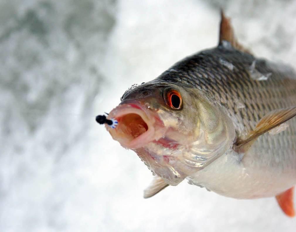Что такое мормышка: для зимней и летней рыбалки, безмотылка и насадочные варианты