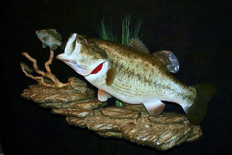 Калико рыбалка – лос-анджелес, ca - fishingbooker