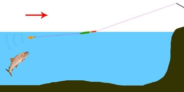 На что ловить форель: где ловить, приманки, снасти, техника ловли