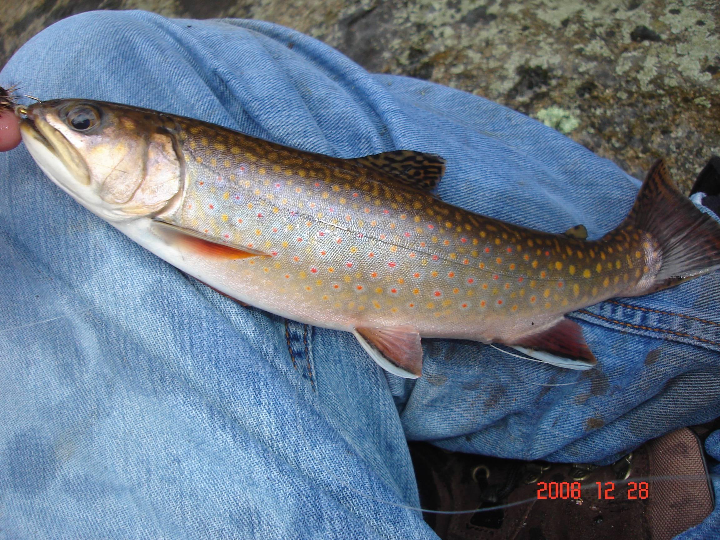 Рыба палия фото - про рыбалку
