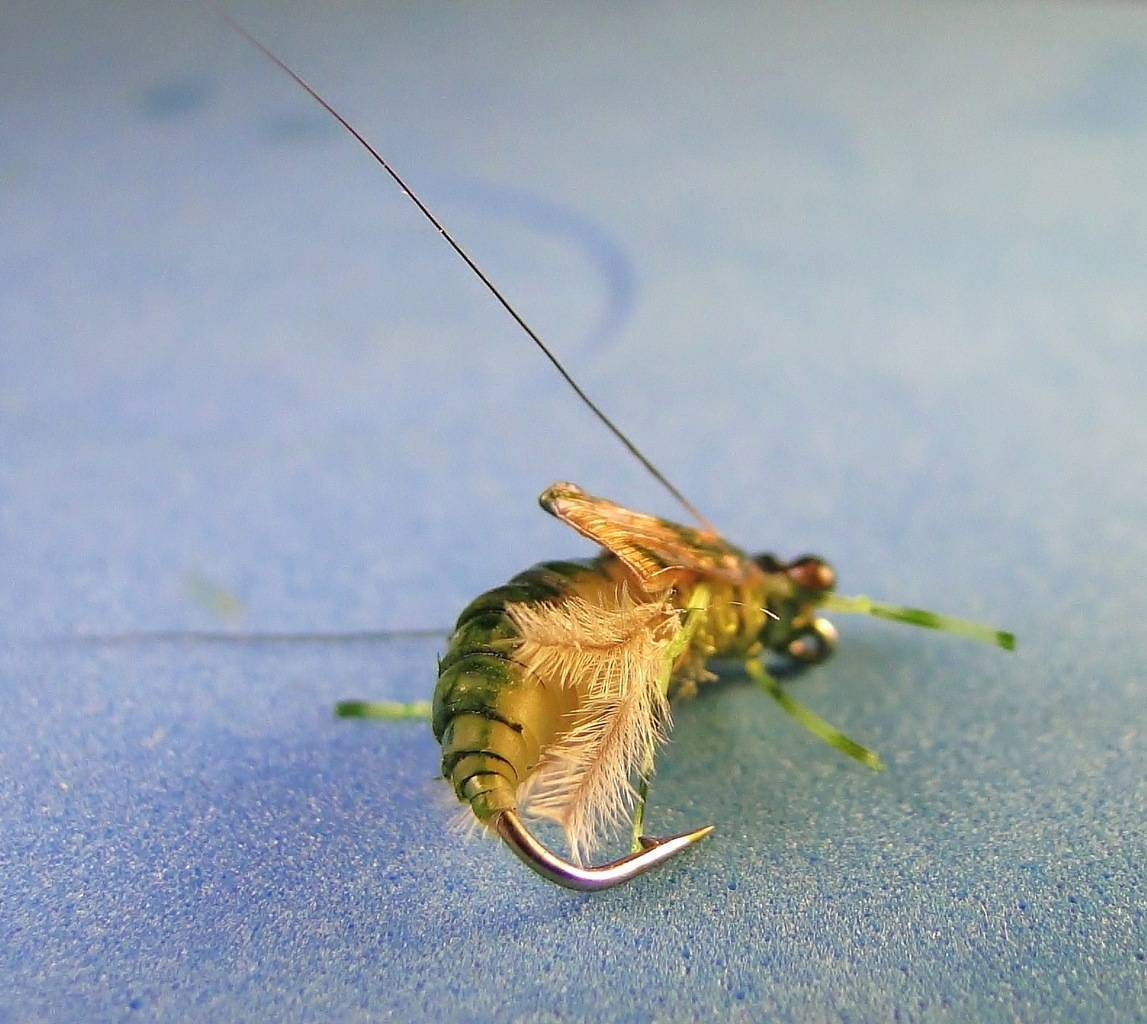 Мушки для рыбалки на нахлыст: чешские мухи, как привязать и другое