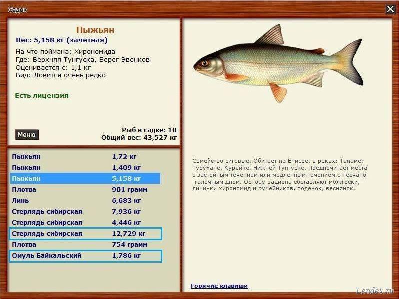 Сиг – особенности рыбы, правила ловли, разведения и выращивания
