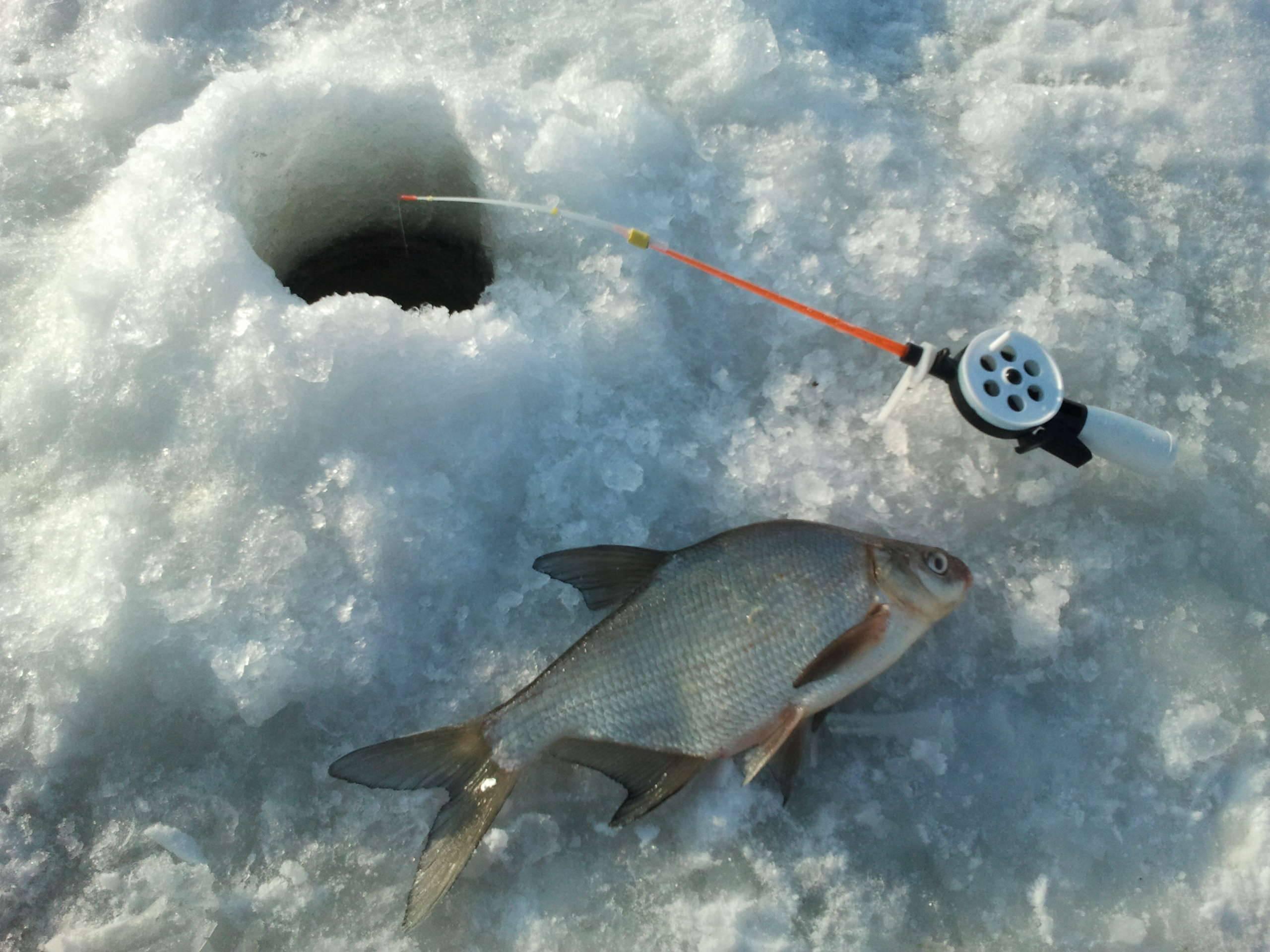 Рыбалка в феврале, ловля рыбы в феврале / ribalcka.ru