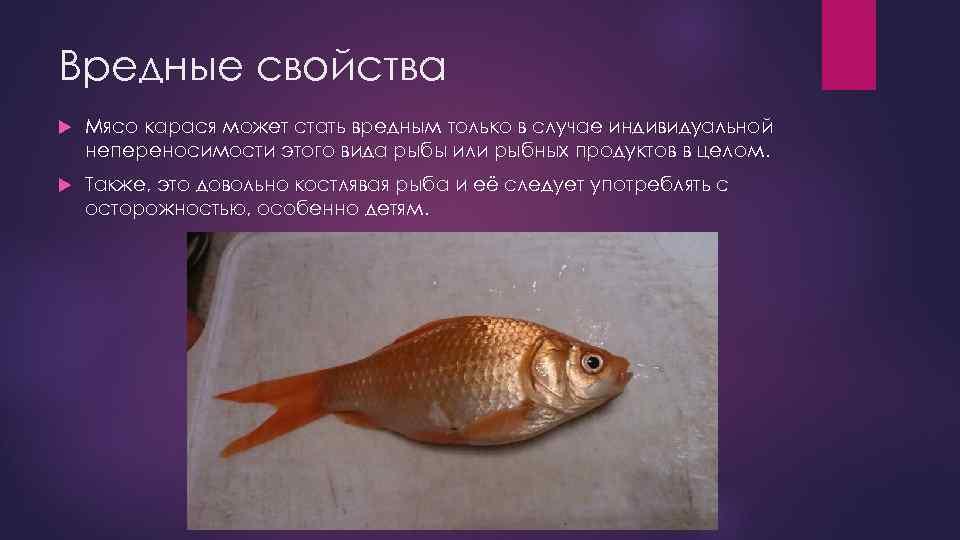 Какие болезни бывают у рыб?