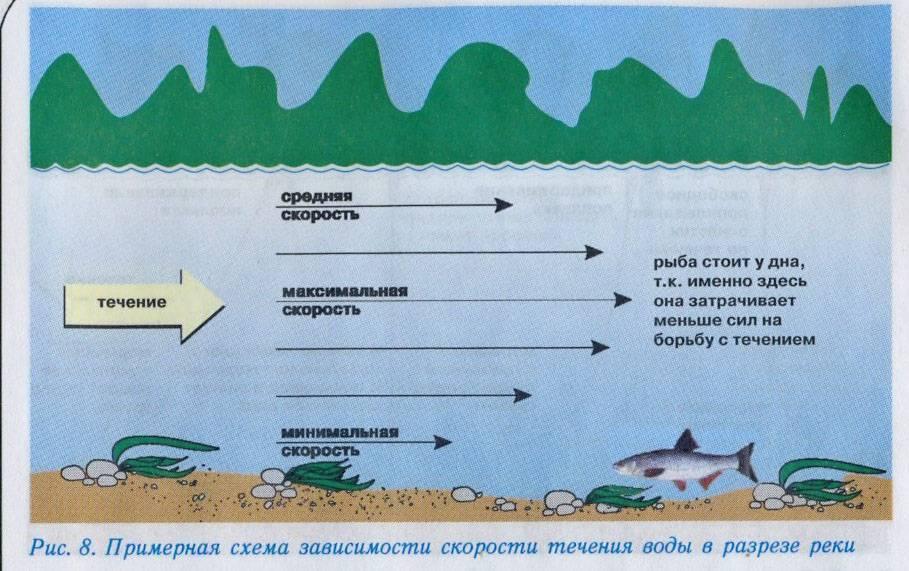 Почему рыба не клюет. как заставить клевать? почему рыба не клюет?