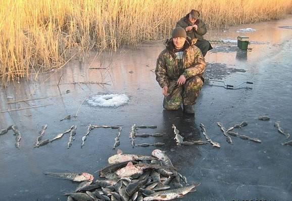 12 лучших рыболовных мест в липецкой области. платные и бесплатные   животный мир
