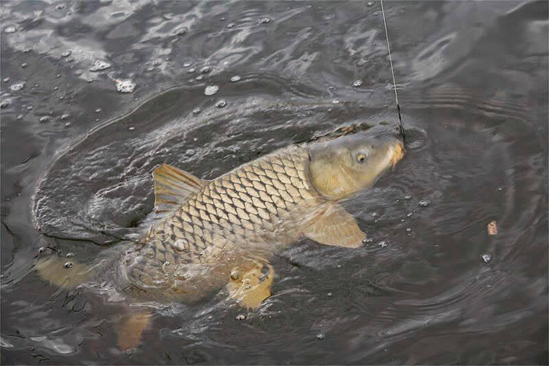 Рыбалка на сазана в дельте волги