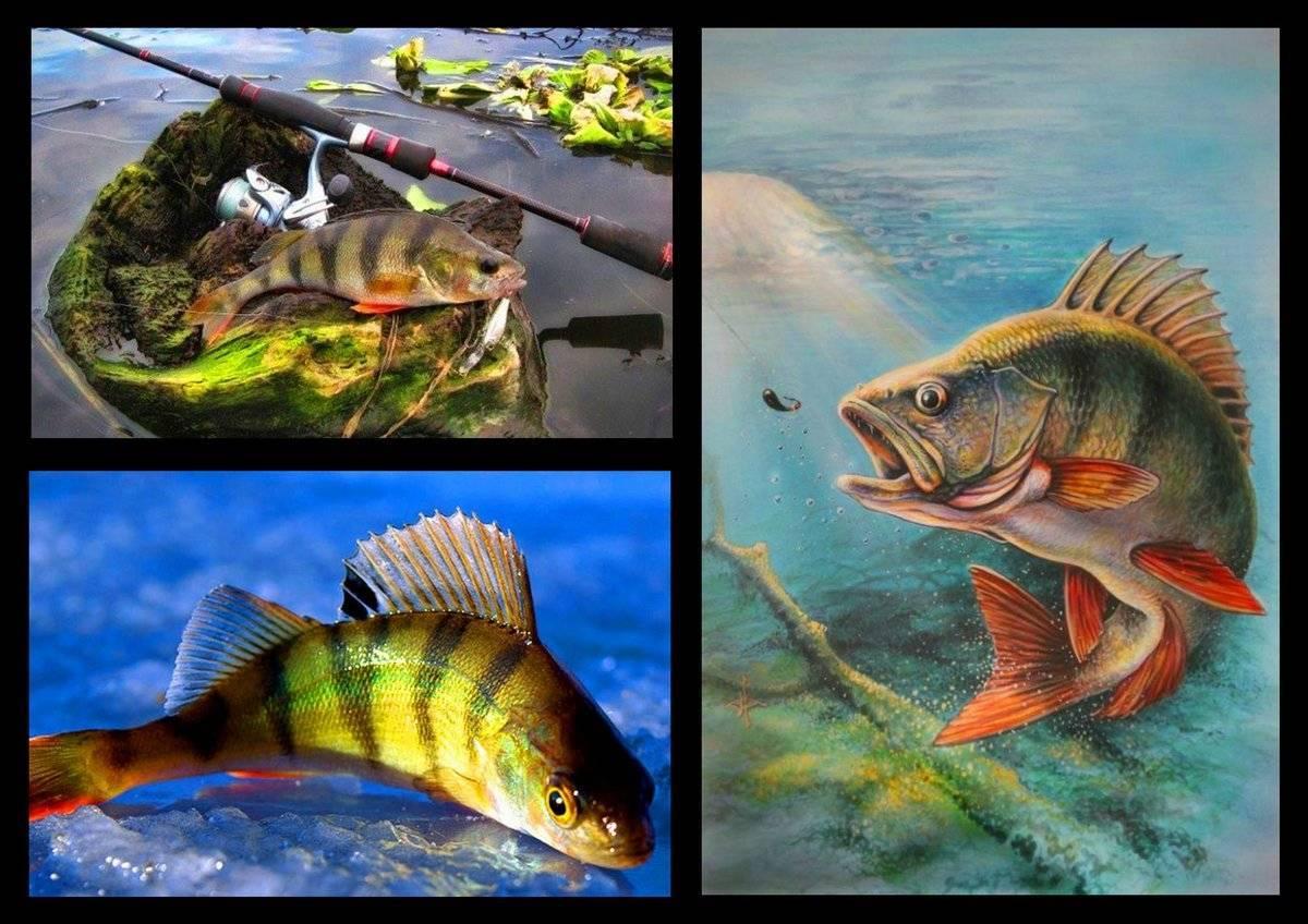 Когда сезон рыбалки в 2020 году: рыбалка с лодки, запрет ловли рыбы когда сезон рыбалки в 2020 году: рыбалка с лодки, запрет ловли рыбы