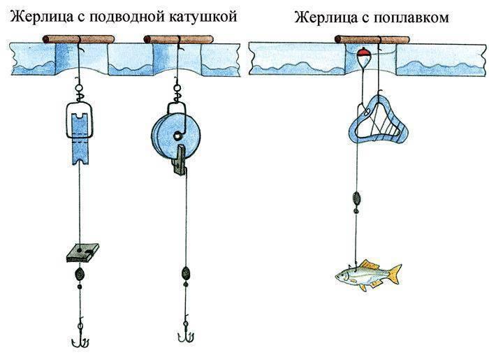 Как наловить живца летом: виды, снасти, методы ловли и способы сохранить живца - truehunter.ru
