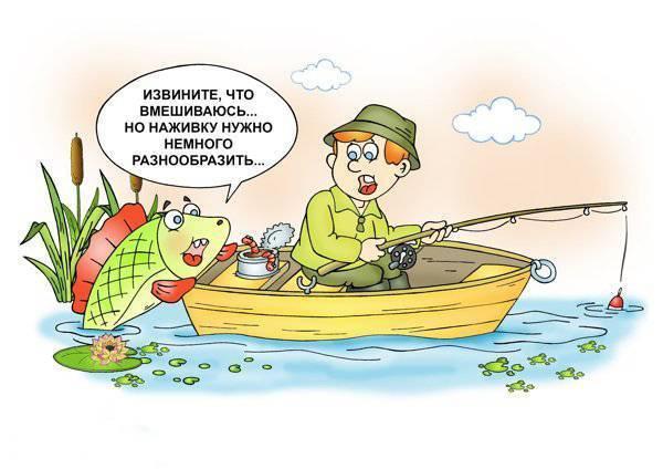 Что на что клюет в разное время года и почему рыба не ловится