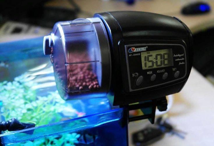 Режим питания: кормушка в аквариуме
