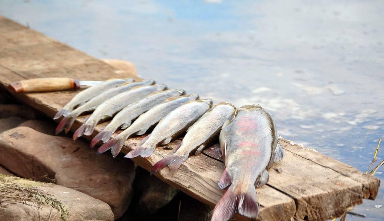 Ловля линя осенью. подходящие водоёмы, именно где обитает и на что ловить.