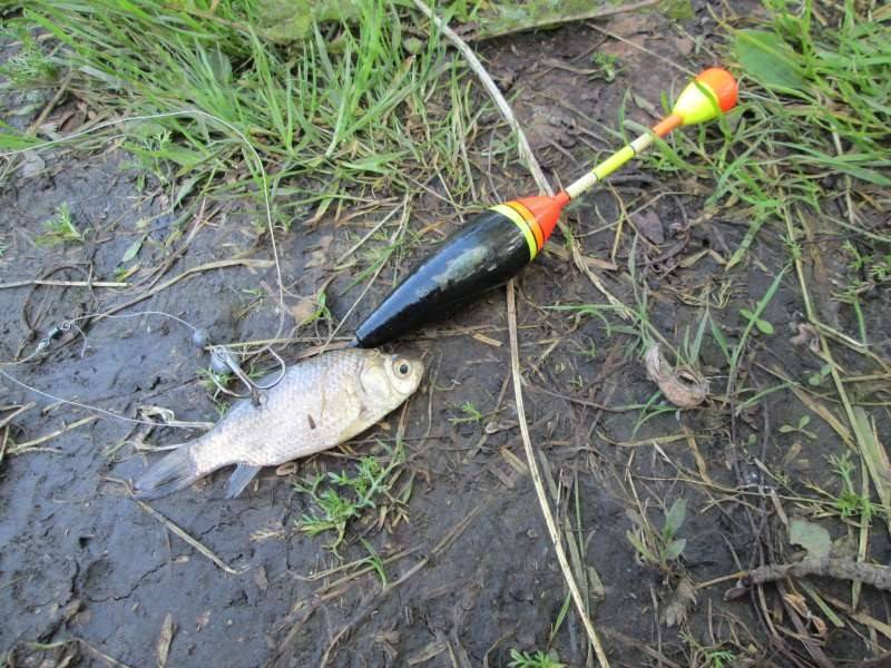 Ловля щуки на живца: как подготовить приманку, какие снасти выбрать, особенности рыбалки в зависимости от места и времени года