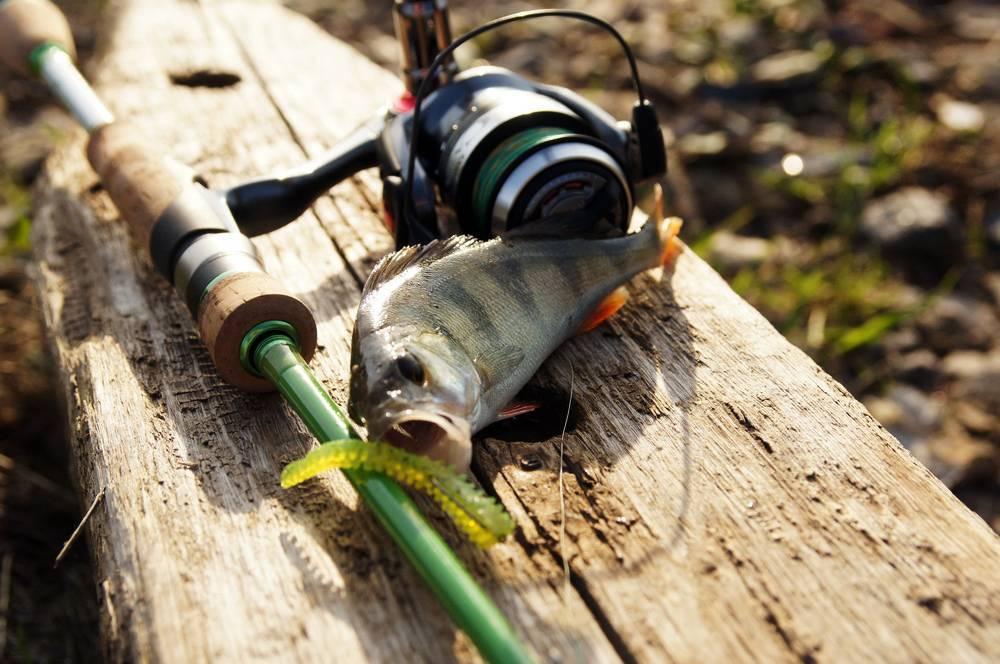 Рокфишинг: рейтинг спиннингов для рокфишинга на черном море, приманки для ловли с берега и другие снасти