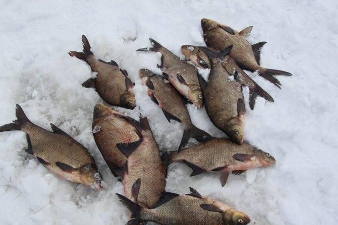 Рыбалка в октябре в подмосковье: особенности ловли на москве-реке, какая рыба водится