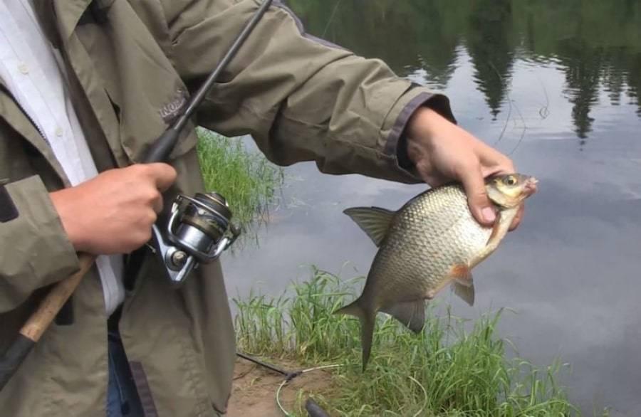 Как выбрать поплавок для ловли плотвы