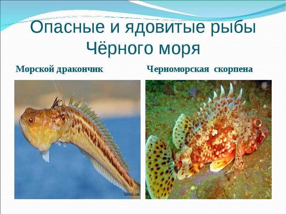 Самые опасные морские обитатели – список, описание, фото и видео