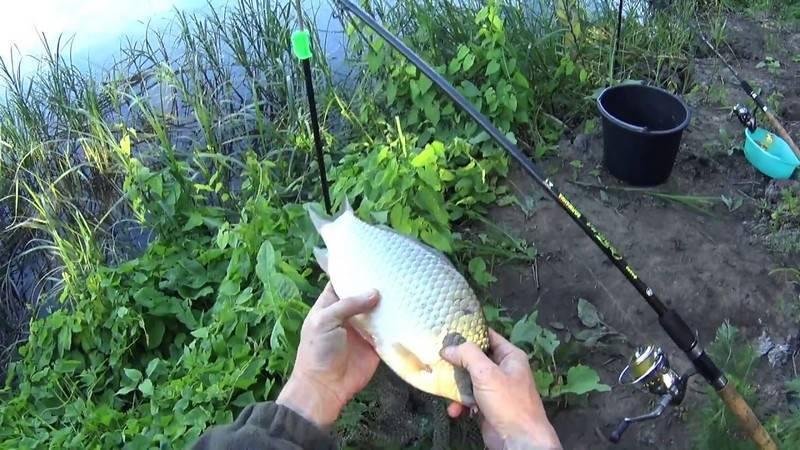 Ловля карася на фидер: как ловить в стоячей воде, как сделать фидерную оснастку