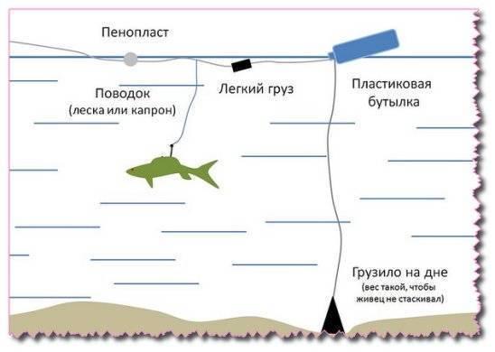 Как поймать речного гиганта? все о ловле сома с берега и с лодки
