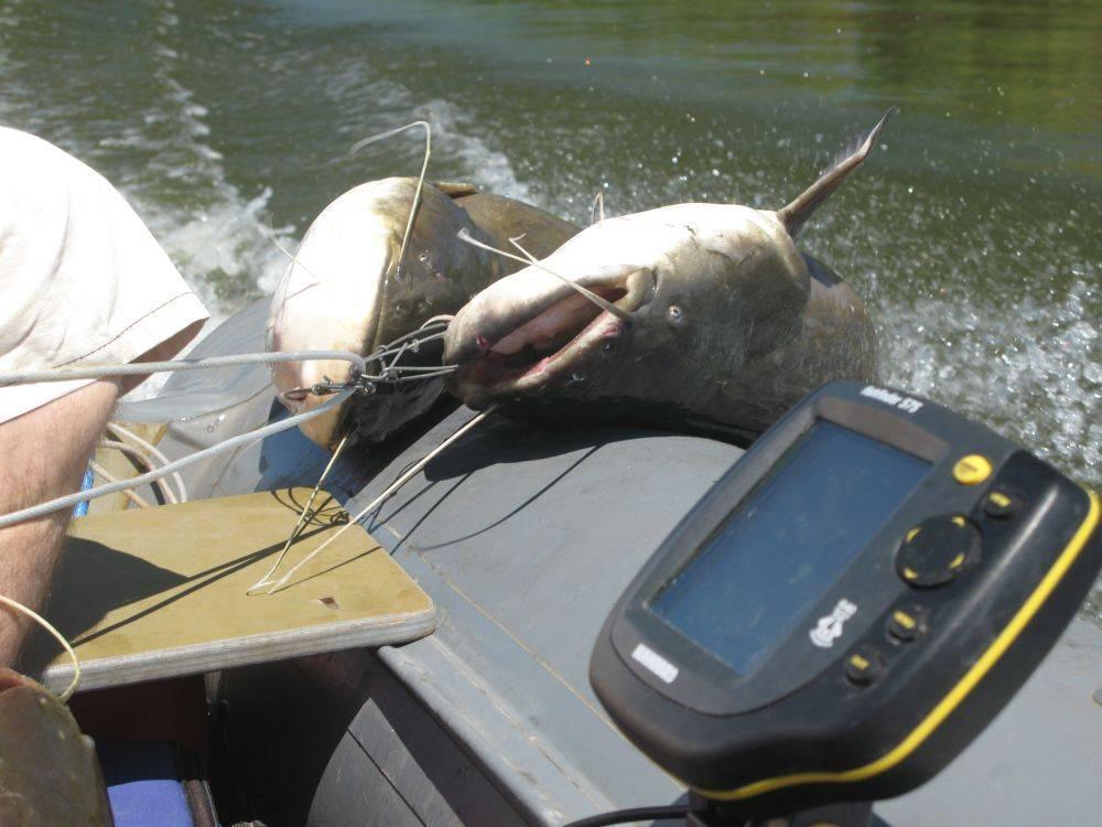 Как поймать сома? советы бывалых рыболовов | заволжье