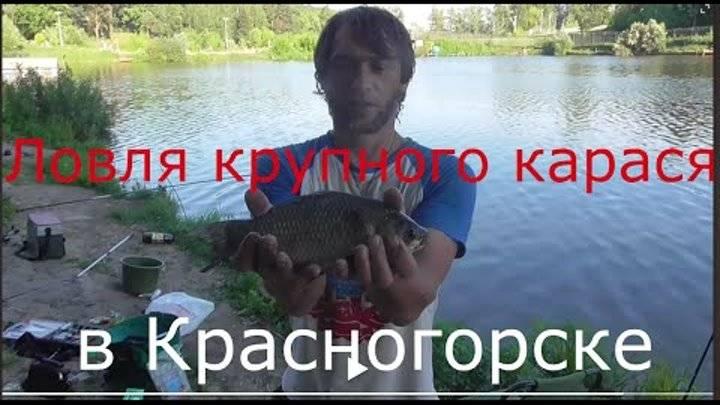 Рыбалка в красногорске 2016, отзывы про платную рыбалку в красногорске на плотине в биг карп, цены